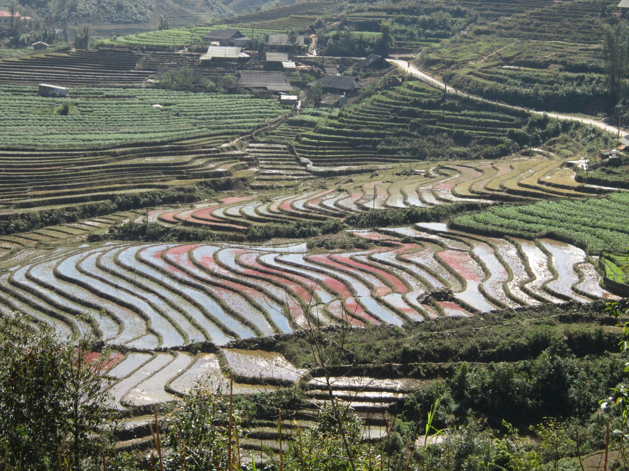 The colourful rice terraces of SaPa, Vietnam