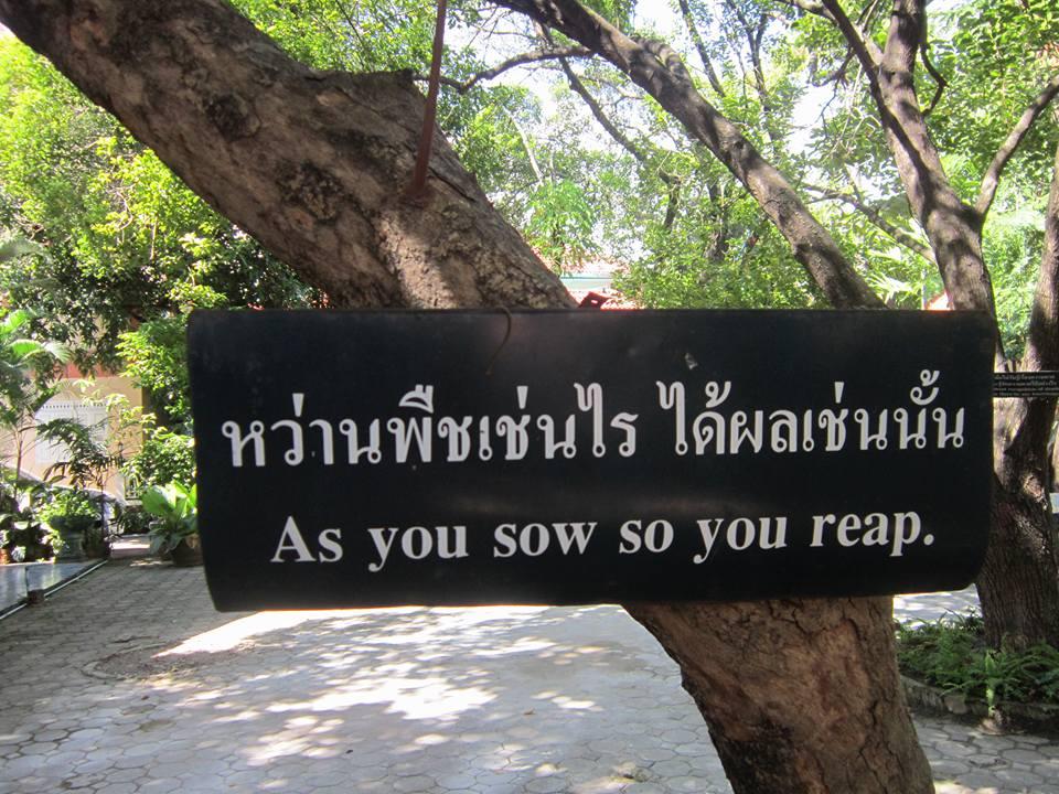 Things to do in Chiang Mai Wat Phra Singh