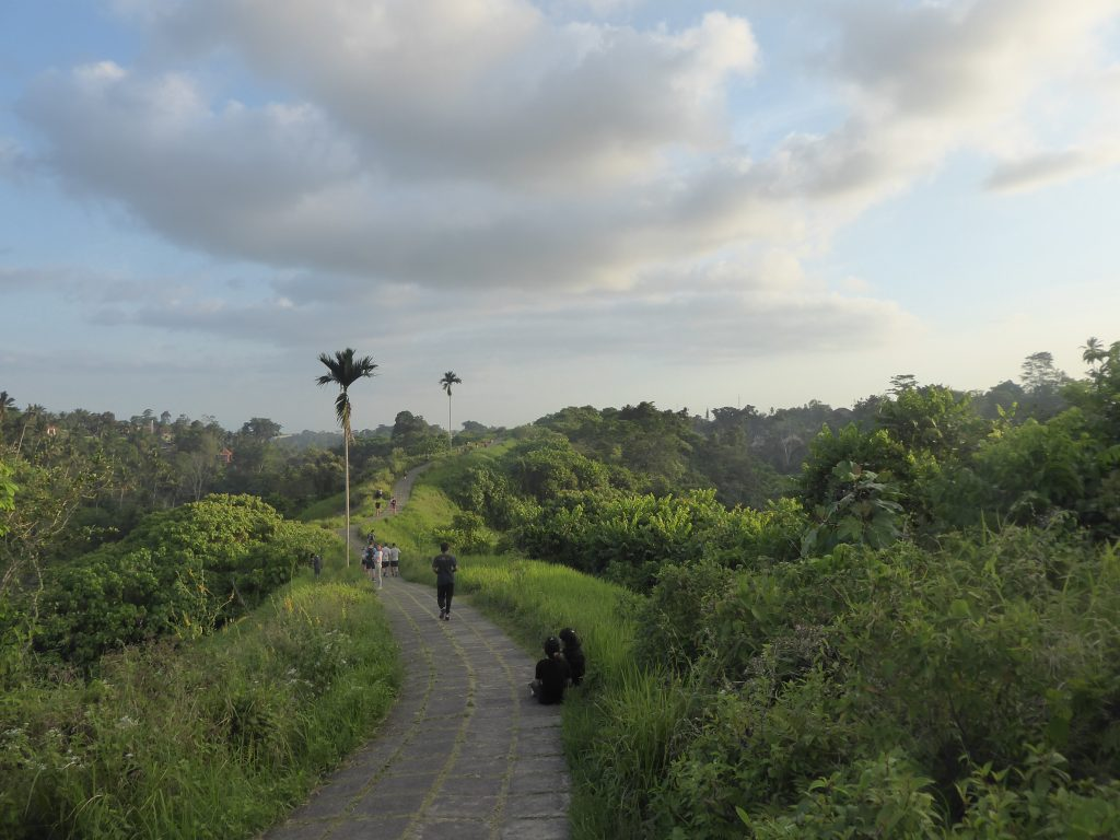A view of the path and surroundings on the Campuhan Ridge Walk - backpacking Ubud (Bali)