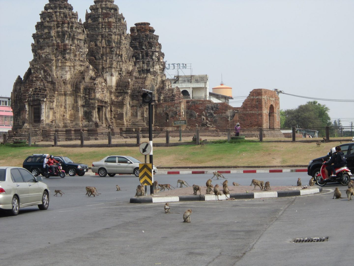 Lopburi - monkeys running across the road, monkey temple in the background