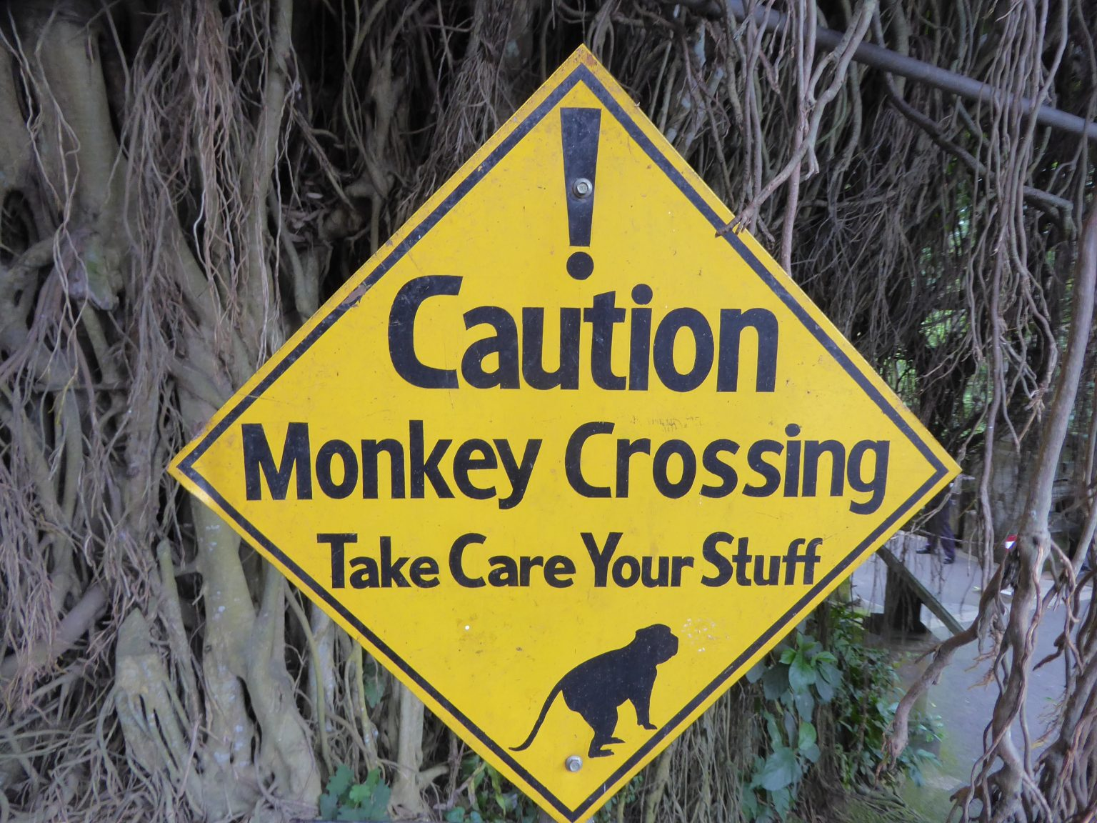 warnign about monkeys for those Backpacking Ubud