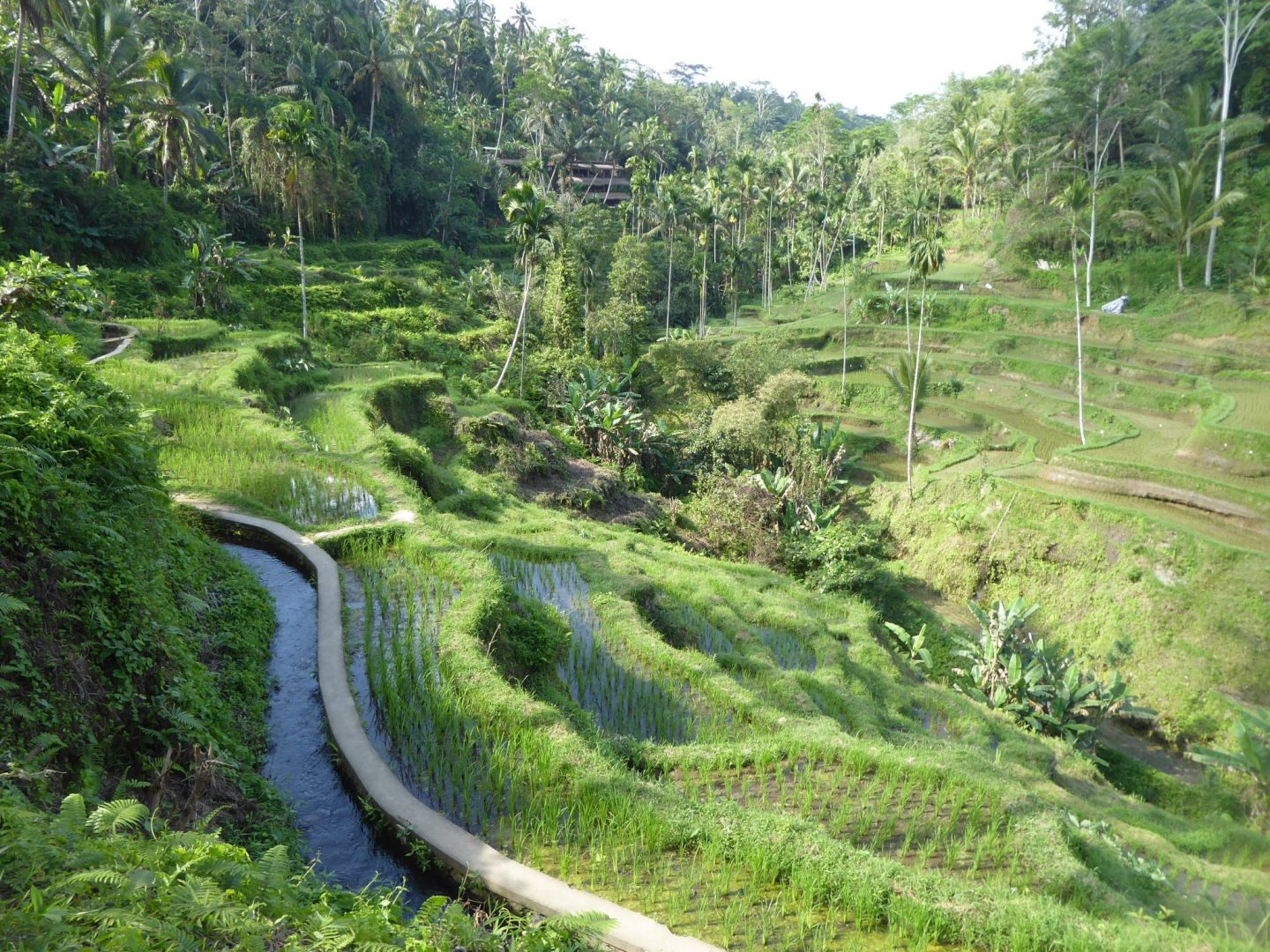 The Tegallalang Rice Terraces - backpacking Bali