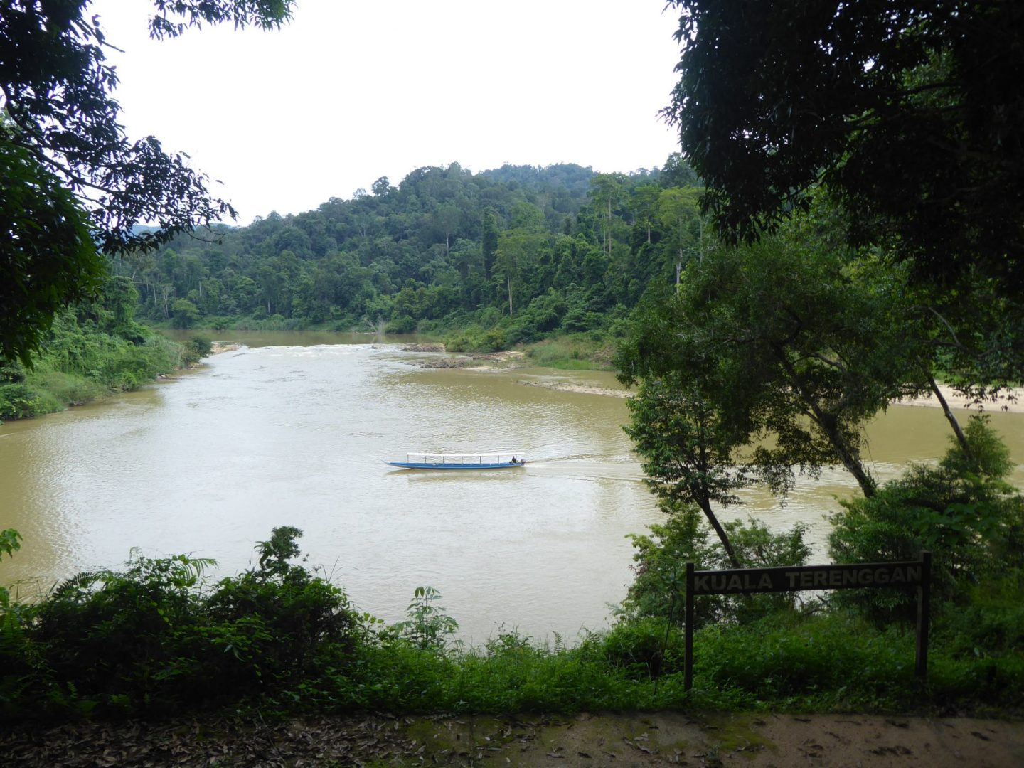 View of river running through Taman Negara,  surrounded by rainforest