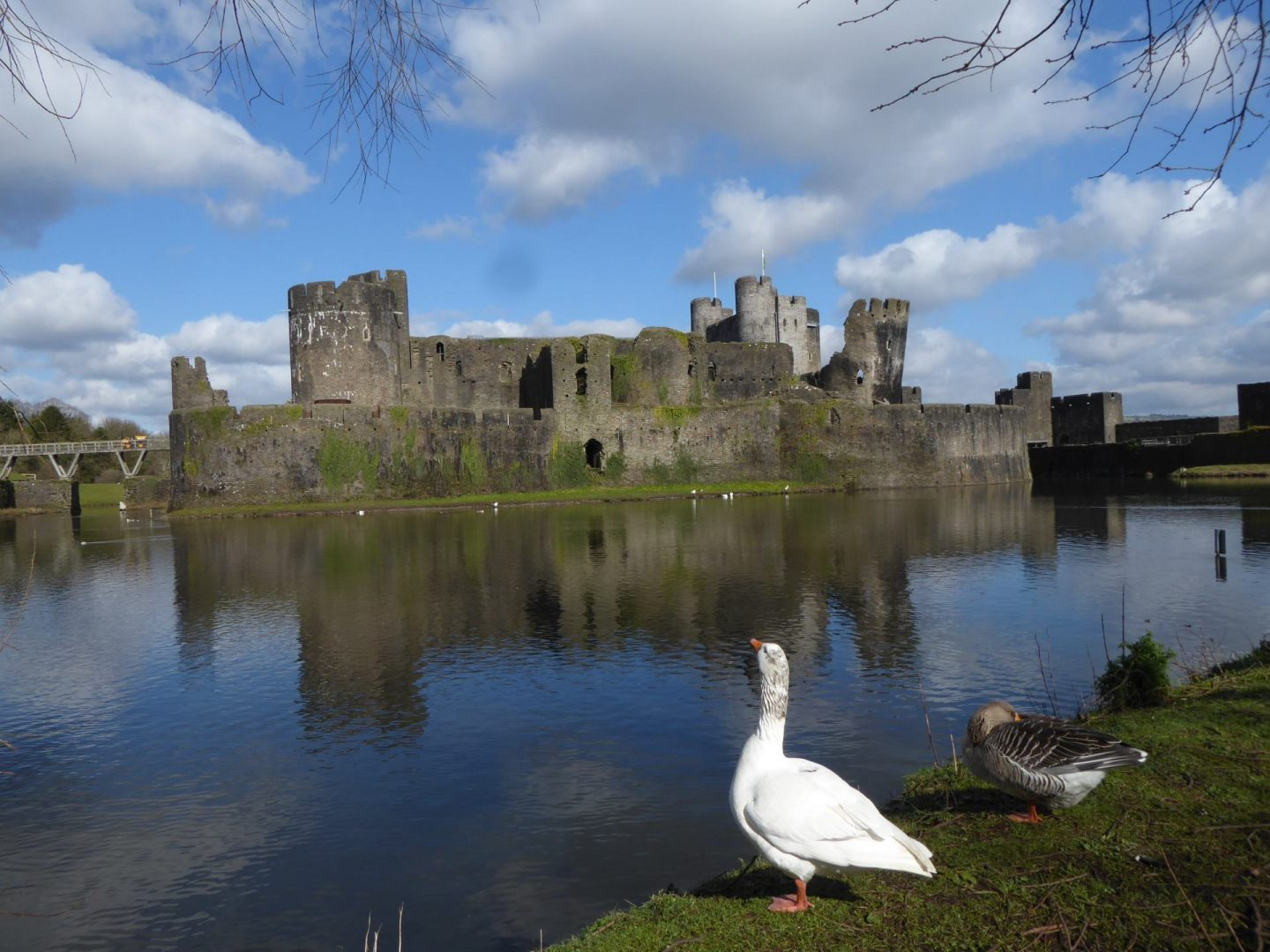 Caerphilly Castle across water. Ducks in foreground.