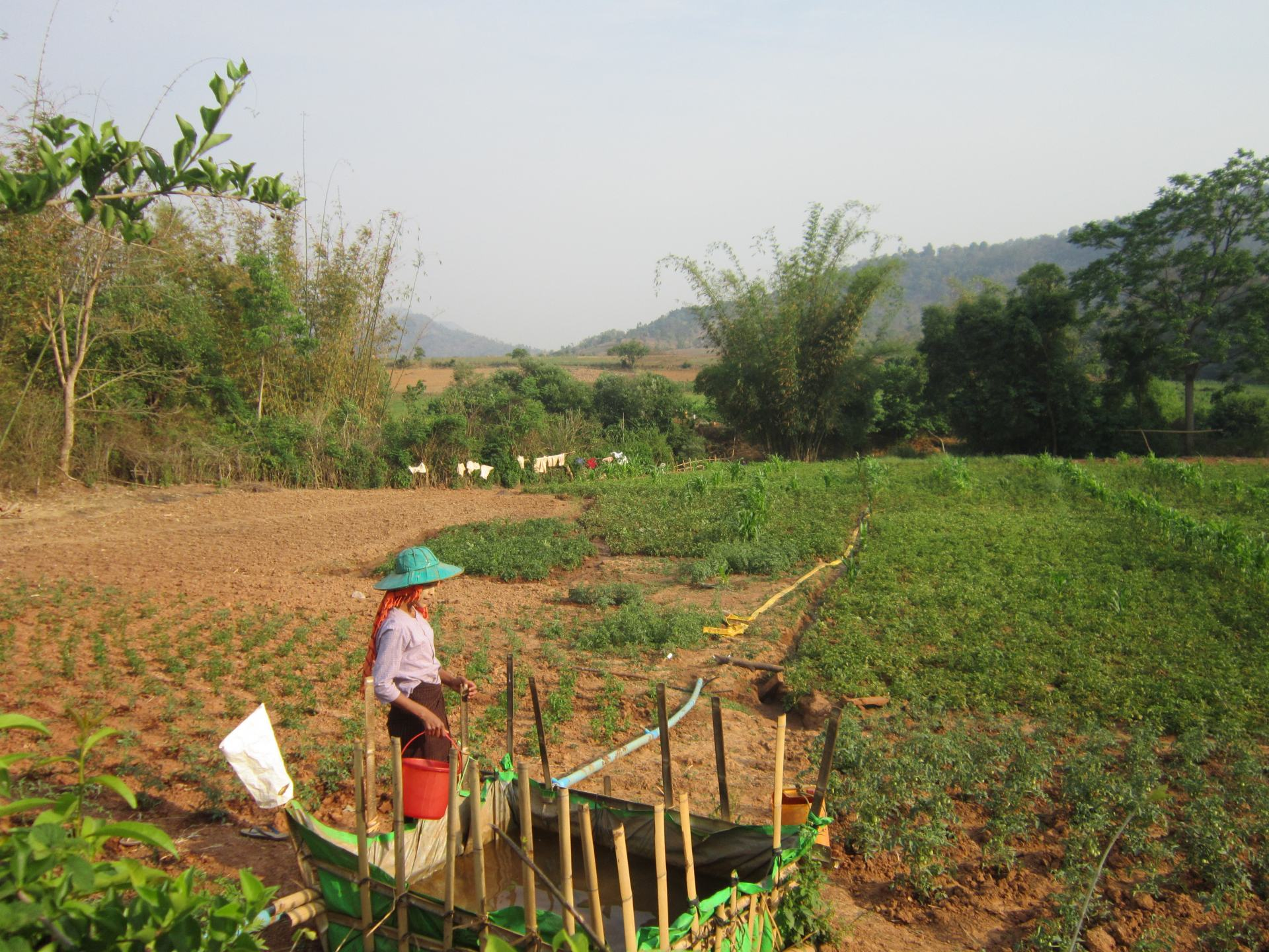 A farmer in Shan State tending to their farm. Seen on the route between Kalaw and Inle Lake, one of the most well known treks in Southeast Asia.
